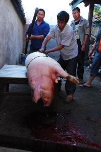 Pig copy